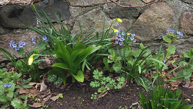 Sunken Garden Flowers