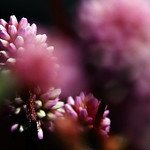 Petit somni de primavera