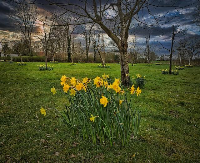 Spring is here!-Zetel