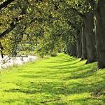 Riverbank at Avenham Park in Preston