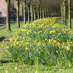Daffodil avenue at Cottam, Preston