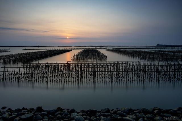 Oyster Farm Series [1]