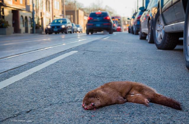 Tragedy on Queen Street