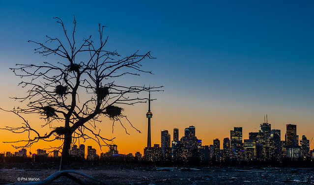 City skyline at sunset as seen from the wasteland of the cormorant nesting site in Tommy Thompson Park