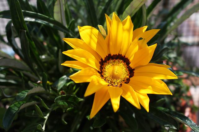 I fiori del mio terrazzo - 293