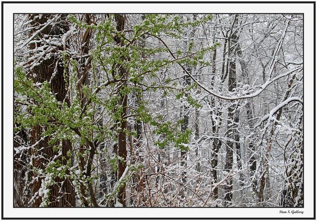 Spring - Unexpected snowfall