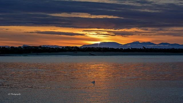 BUFFLEHEAD DUCK  ( On a sunset, river cruise )