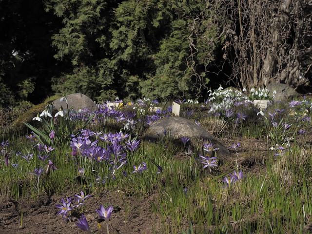 Tartu University Botanical Gardens