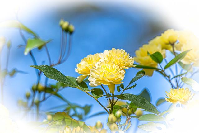 Yellow Flowers Springtime