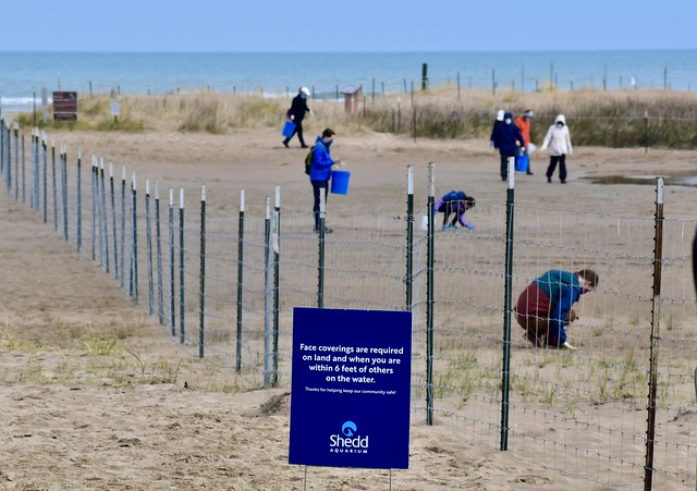 Chicago Piping Plover Montrose Beach Spring Cleanup Day, Shedd Aquarium Action Day