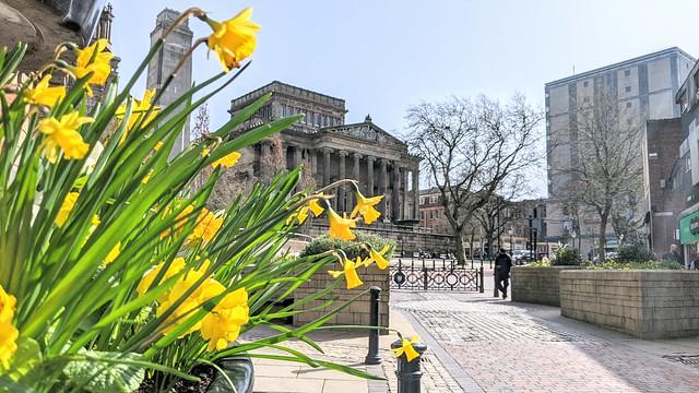 Spring flowers in Preston