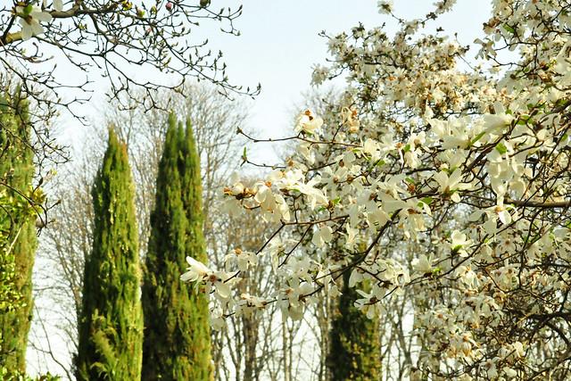 April 2021 --- Herzogenriedpark Mannheim_2_Brigitte Stolle