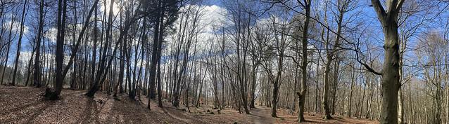 den woods