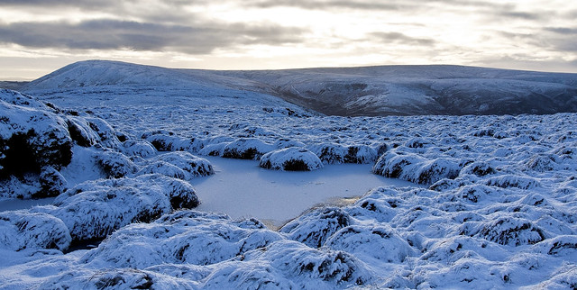 Top Bowland forest