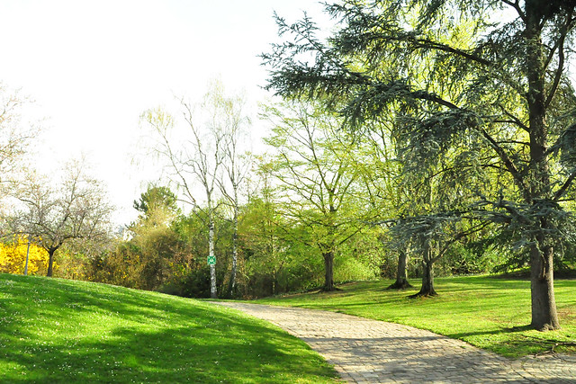 April 2021 --- Herzogenriedpark Mannheim_1_Brigitte Stolle