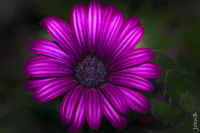 Flourescent beauty