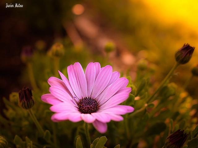La paz y tranquilidad se conjugan cuando observas lo maravillosa que es la naturaleza