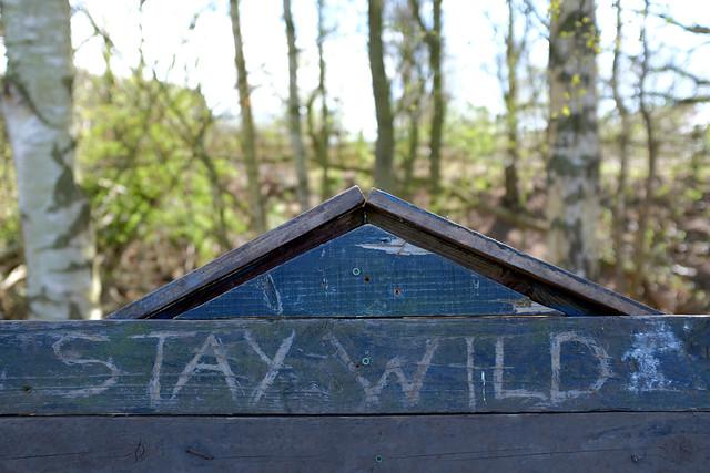 Stay wild? (108/365)