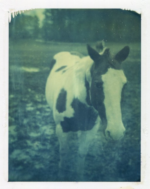 Polaroid Week Day One - Paint Mare