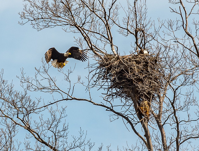 Returning to the nest (to stay at home?).