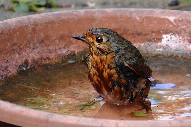 365 - Image 108 - Bathtime...