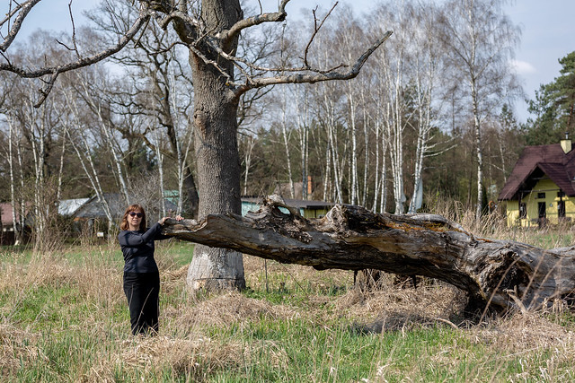 Playing with an old tree