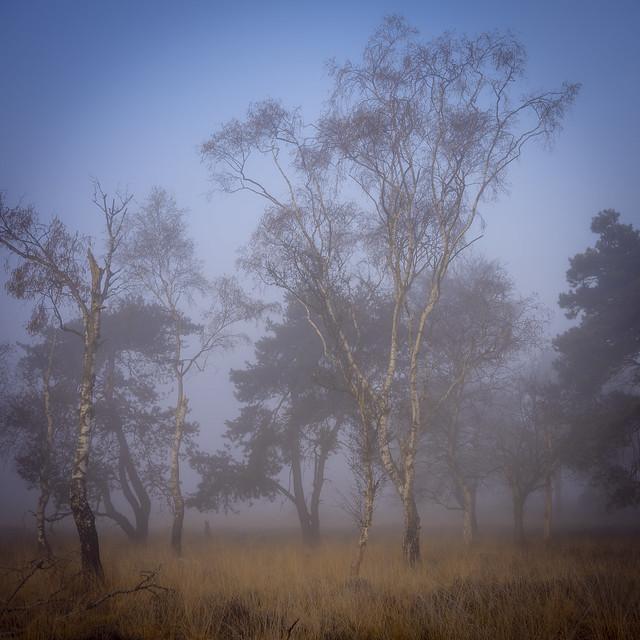 KH morning Fog