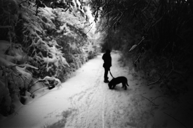 Winter dog-walk