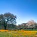 Namaqua a la van Gogh Reedited
