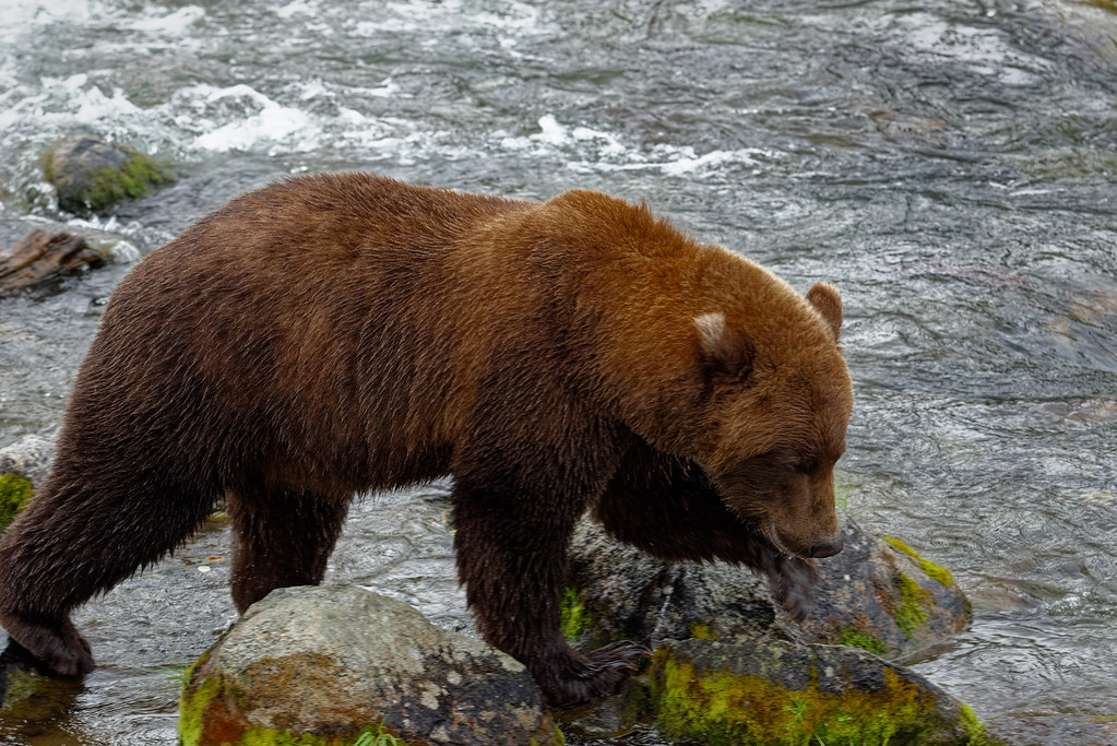 A Chance to Feel Alive Outside (Katmai National Park & Preserve)