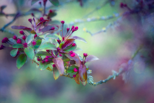 The Poetry of Spring
