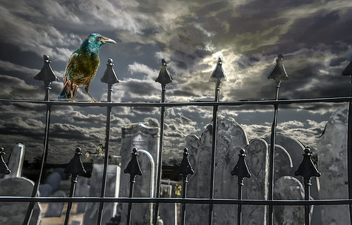 grave stone crow sunrise fence rework new improved cloud colorful day digital flickr country bright happy colour scenic america world sunset sky red nature blue white tree green art light sun park landscape summer old photoshop google bing yahoo stumbleupon getty national geographic creative composite manipulation hue pinterest blog twitter comons wiki pixel artistic topaz filter on1 sunshine image reddit tinder russ seidel facebook timber unique unusual fascinating color