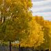 Fall in Mendoza