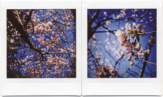 instax magnolia
