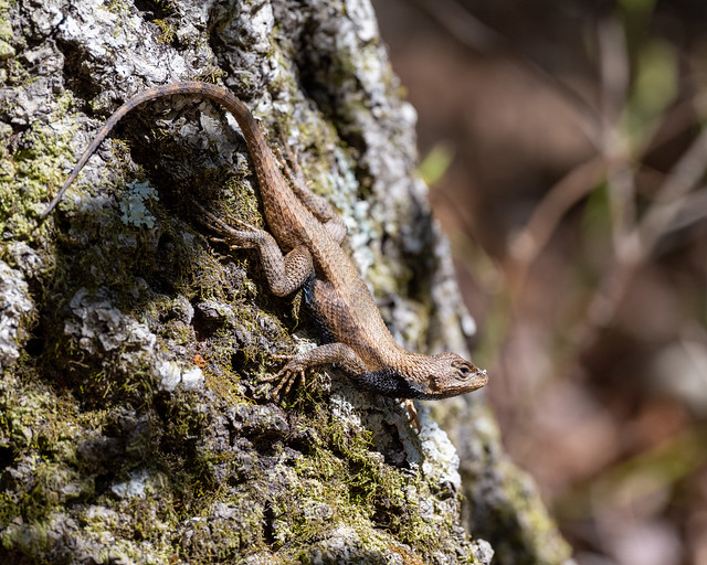 Lizard in Dappled Light