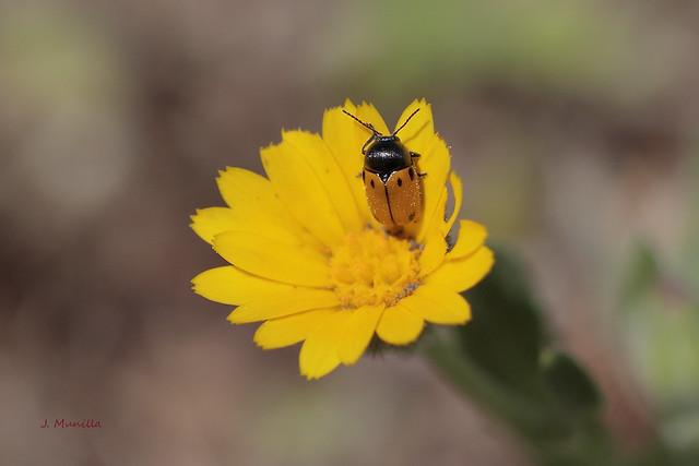 Flor y visitante IMG_5889