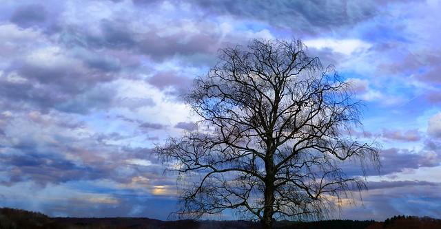 Astugue (Hautes-Pyrénées, Occitanue, Fr) – Un arbre en hiver