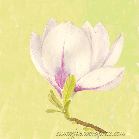 magnolia flower sketch