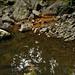 Creek Pond