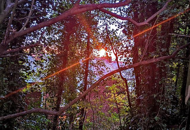 Sun glare through the trees at Preston