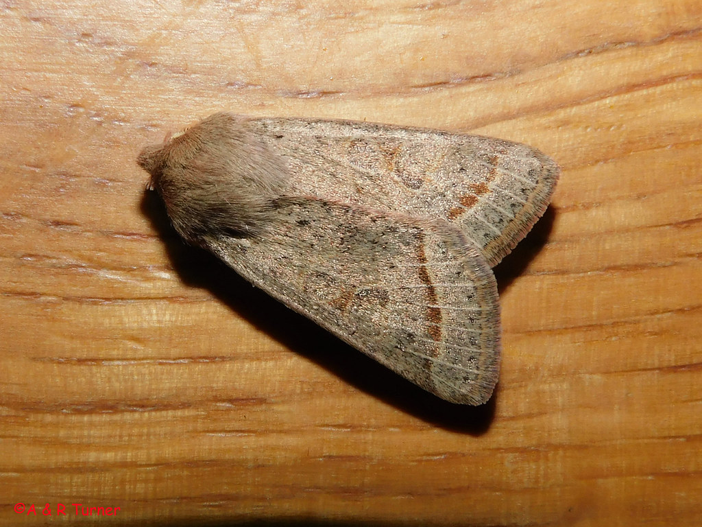 9 Common Quaker 030421