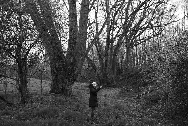 amazing tree @ walking path 4