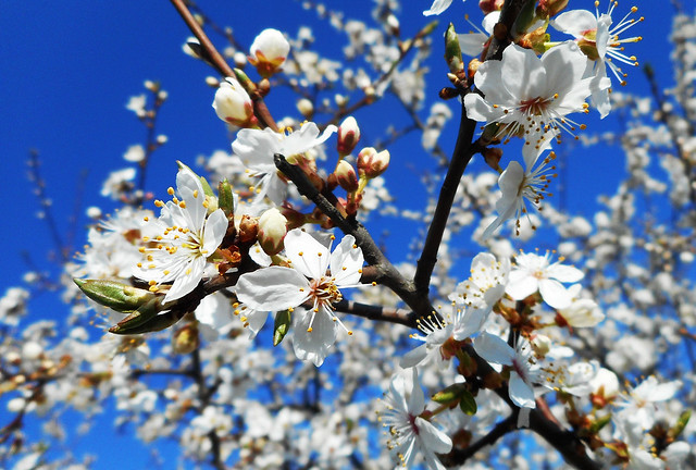 Beautiful sunny spring 07