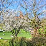 Spring at Miller Park, Preston