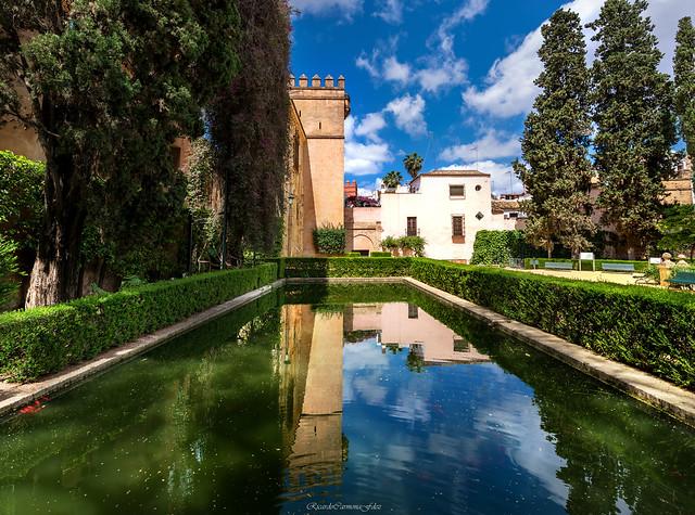 The pond - El estanque