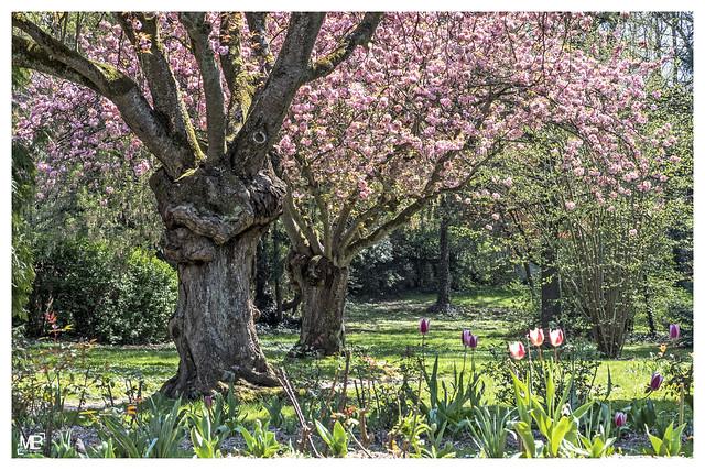 Le printemps DxOFP_DSF3970
