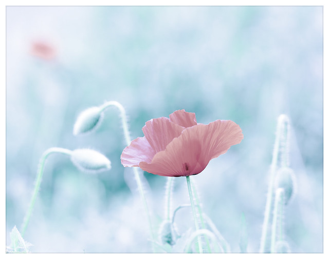 Acostúmbrate a ganar en silencio y dar ayuda en el anonimato. La primera aleja la envidia y la segunda llena el corazón.