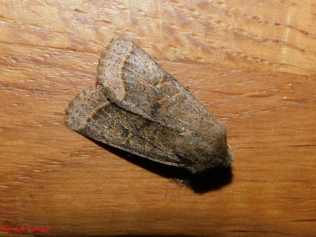 8 Common Quaker 030421