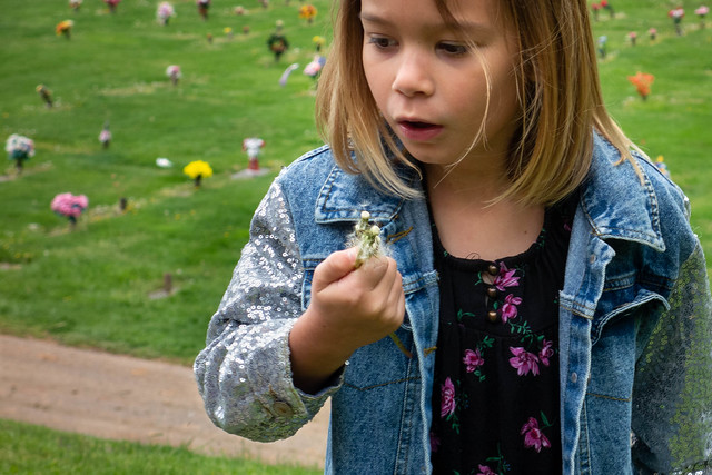 Watching the dandelions blow away...