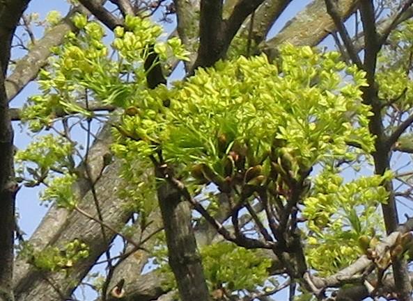 Close-Up: Greenish Petals
